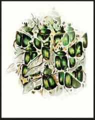 <p>Bokstavsbagge (privat) - akvarell, guldfärg och tidningsurklipp på akvarellpapper, 28 x 21 cm. 2008.</p>